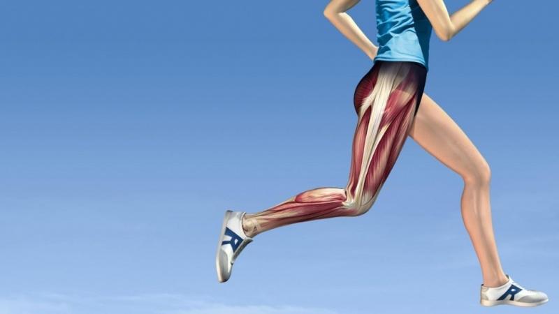 Мышцы верхних конечностей человека: строение и функции