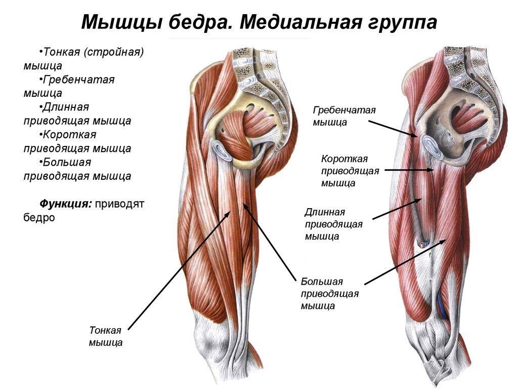 какие мышцы на ногах