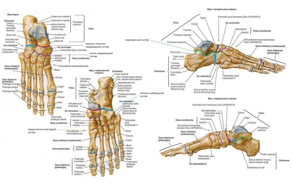 все мышцы ног и суставы