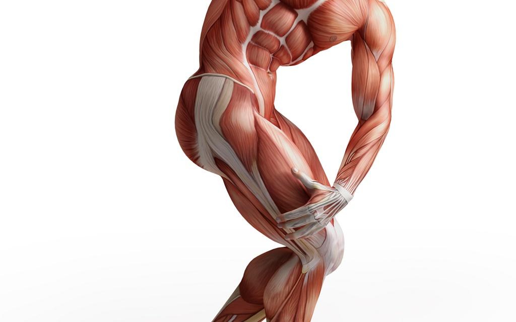 мышцы ног названия
